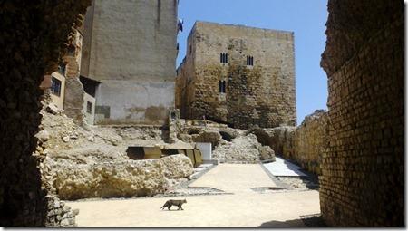 Кот, живущий в подземельях древнего цирка Таррагоны